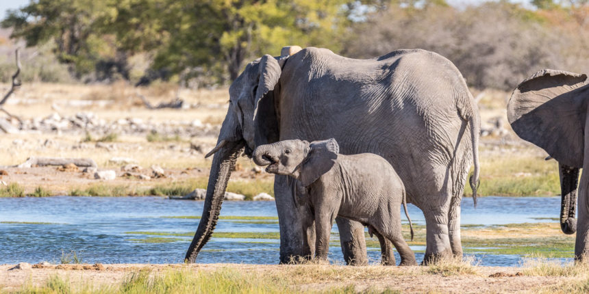 Elefanten Etosha NP Namibia
